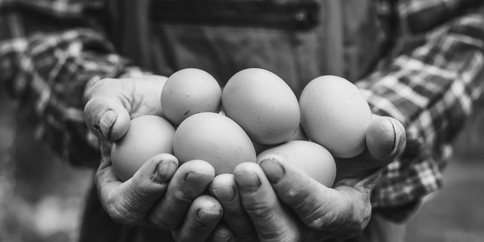 18724-insight-thumb-eggs_1560x780